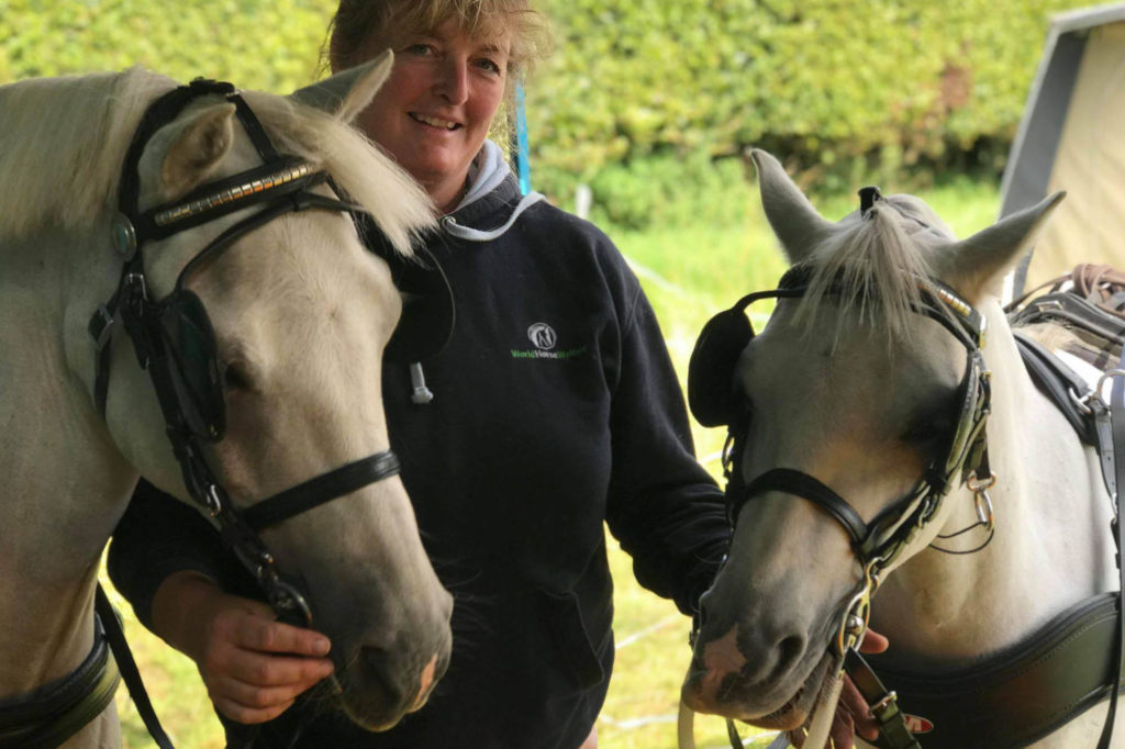 Two grey driving ponies with lady wearing a World Horse Welfare jumper