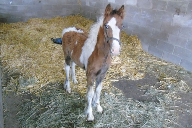 Dumped six-week-old foal lucky to survive: Charity appeals for information