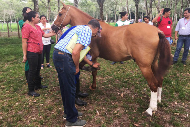 UK equine charities deliver training in Brazil to government officials from across the Americas