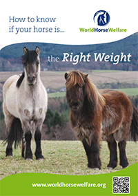 How to know if your horse is. the right weight