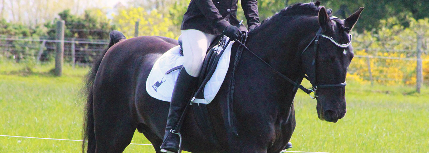 Black horse with plaited mane and white saddle cloth being ridden in a dressage test in a field