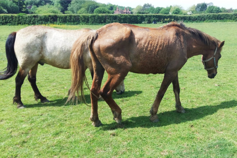 Waltham Chase woman banned from keeping horses