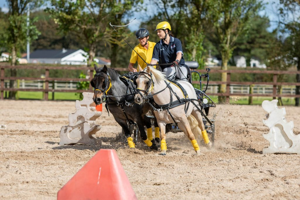 Two driving ponies cantering across an arena