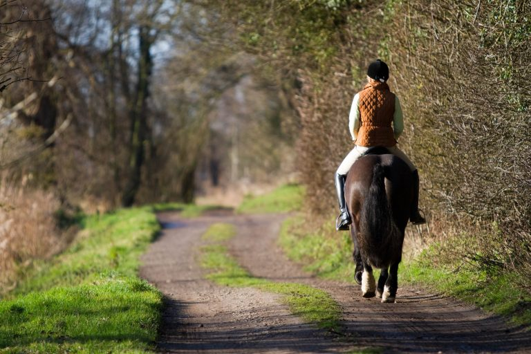 Spindles Farm, Amersham: the UK's worst-ever case of horse welfare abuse