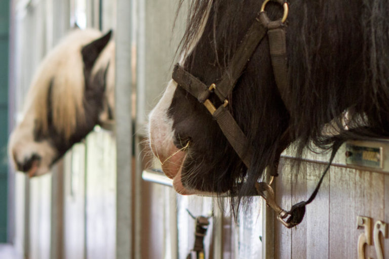 Occupying a stabled horse