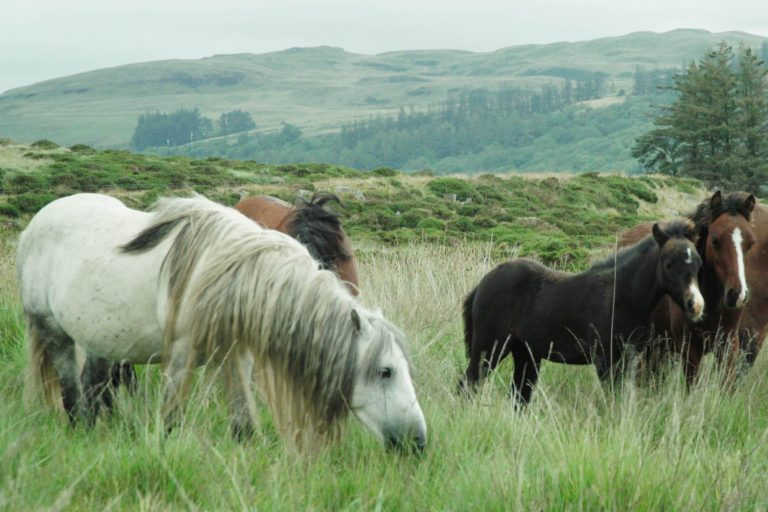 Technology triumphs to track down isolated ponies