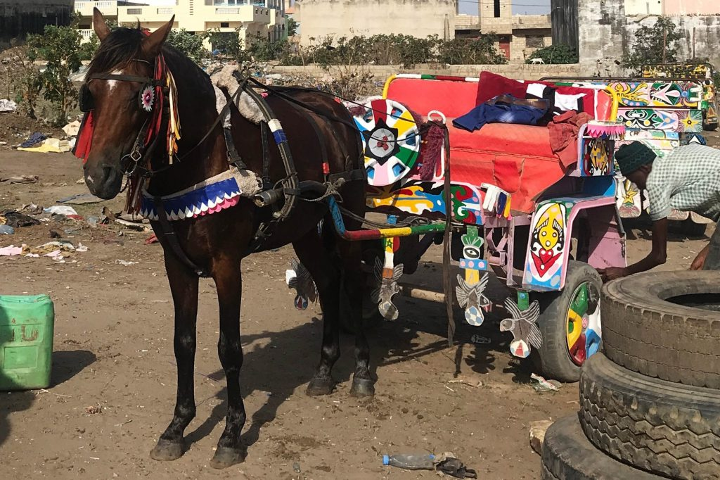 Working horse hitched to a colourful cart with owner checking it