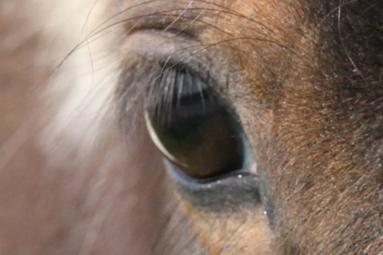 Responsibility for equine welfare is not a choice, it's a duty and the  equine sector must pull together