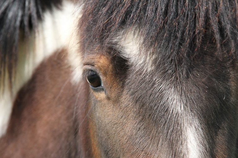 'Who is Responsible?' asks World Horse Welfare at Annual Conference 2019