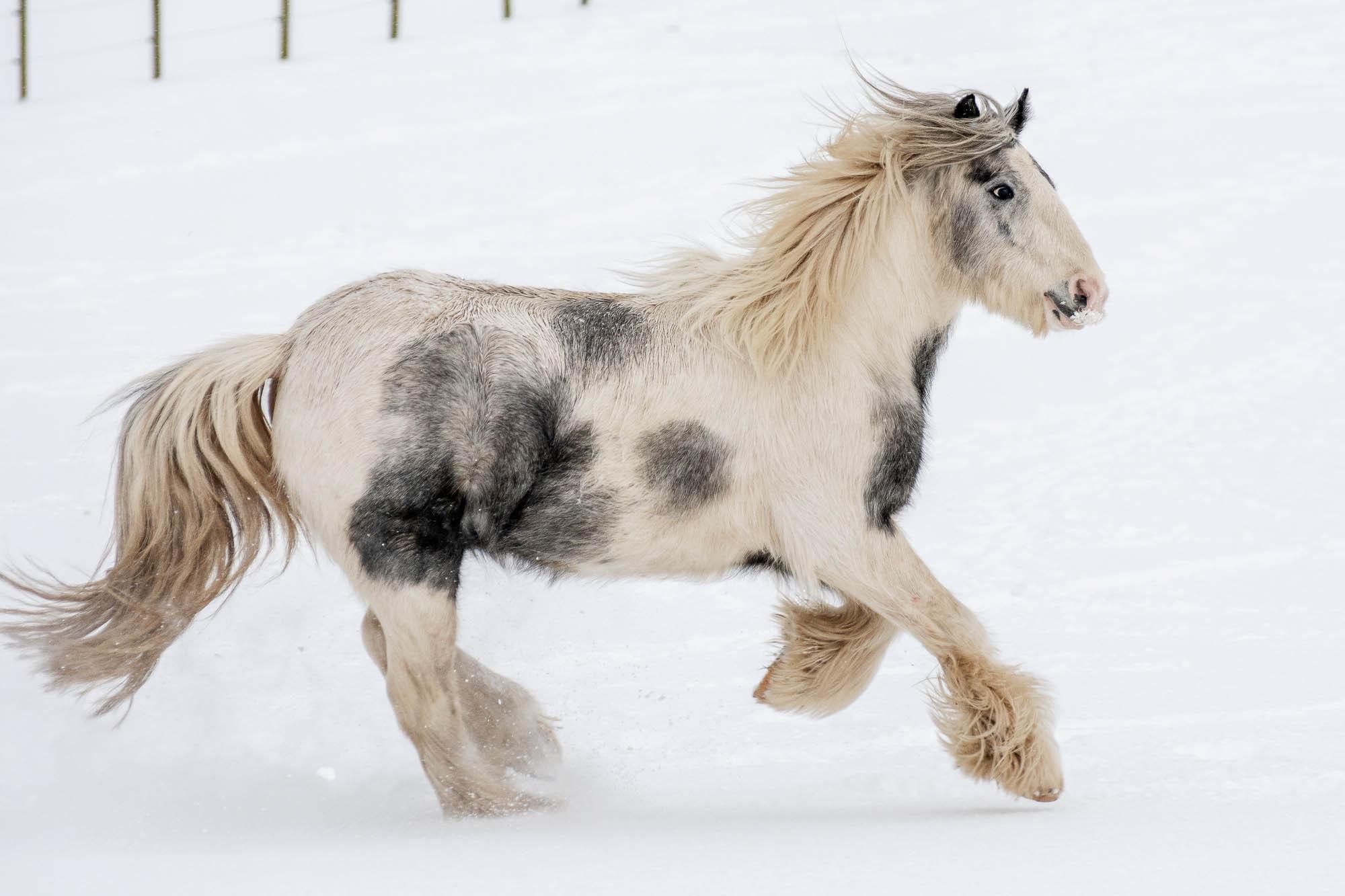 Christmas Pony Grooming