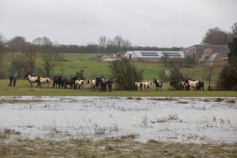 Multi-agency operation takes place to rescue 43 horses in Wellingborough
