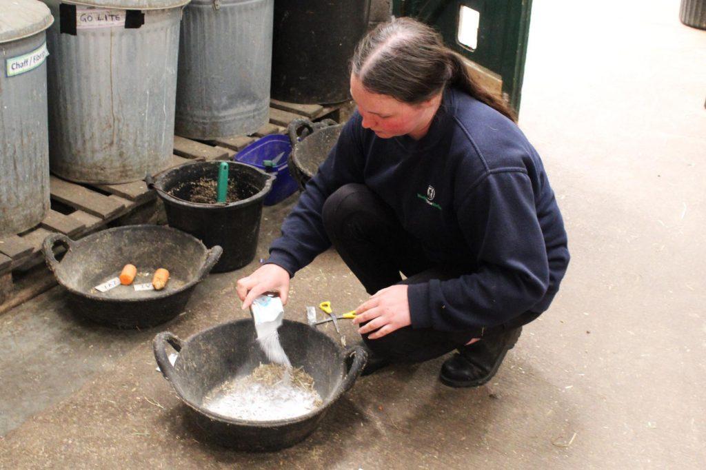 World Horse Welfare groom mixing up feeds