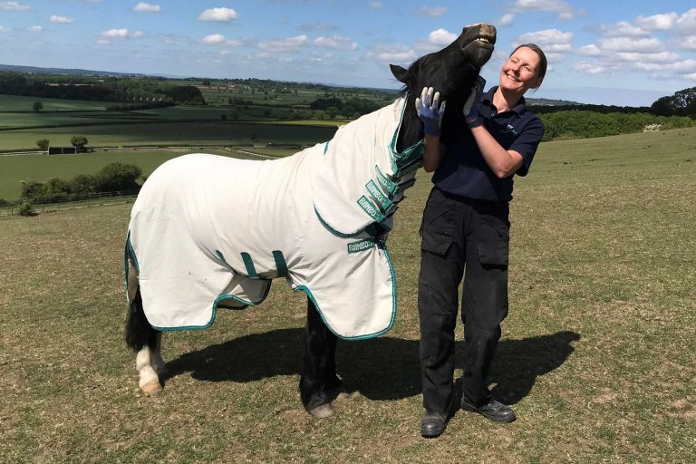 Sweet itch: what is it and how do we manage our ponies who have it?