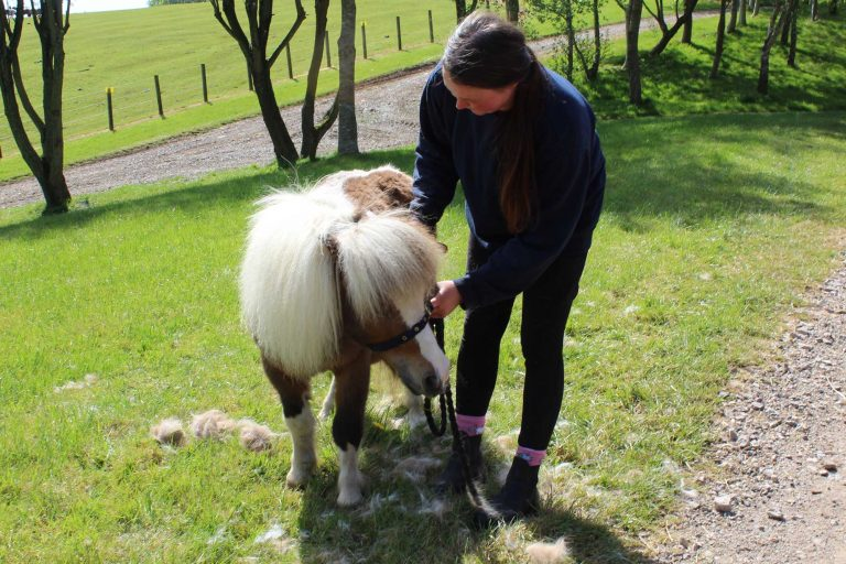 Ever wondered what a day in the life of a World Horse Welfare groom is like? Read on to find out!