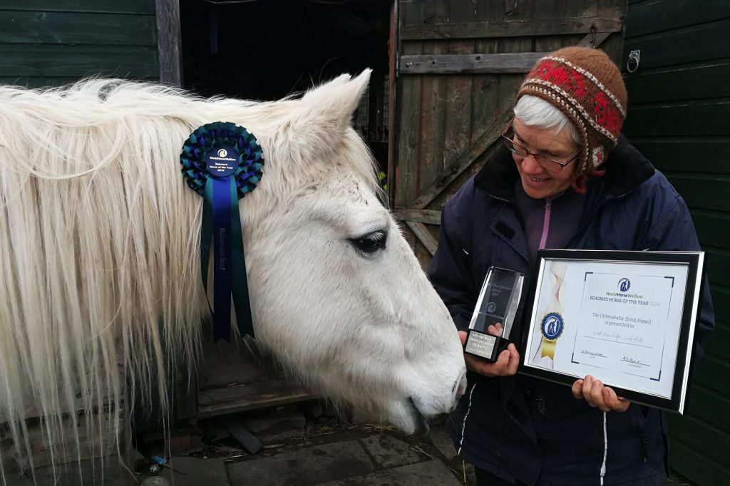 Grey pony with champion rosette