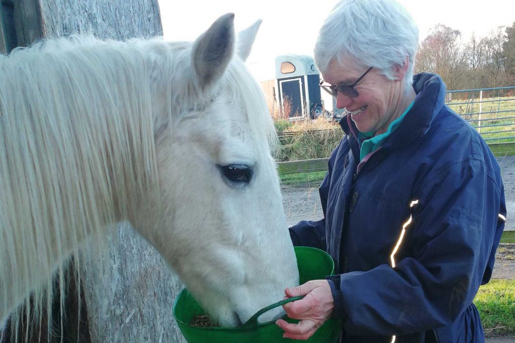 Grey pony being fed from green bucket