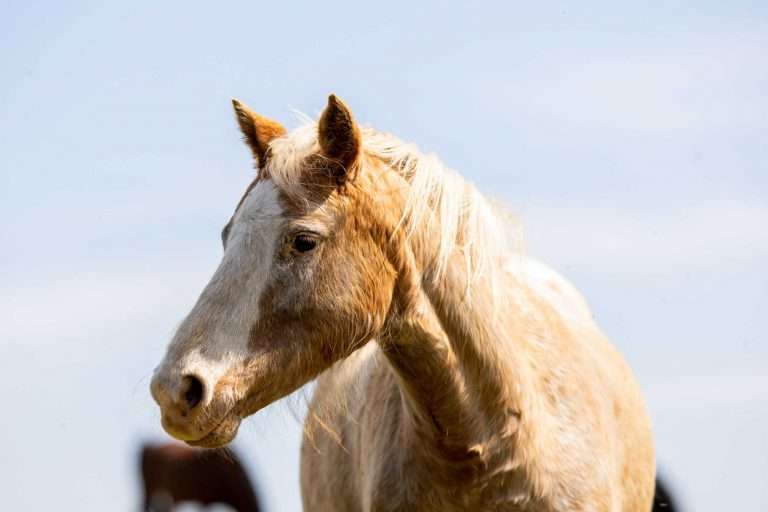 World Horse Welfare confirms its centres will remain closed to the public until 2021