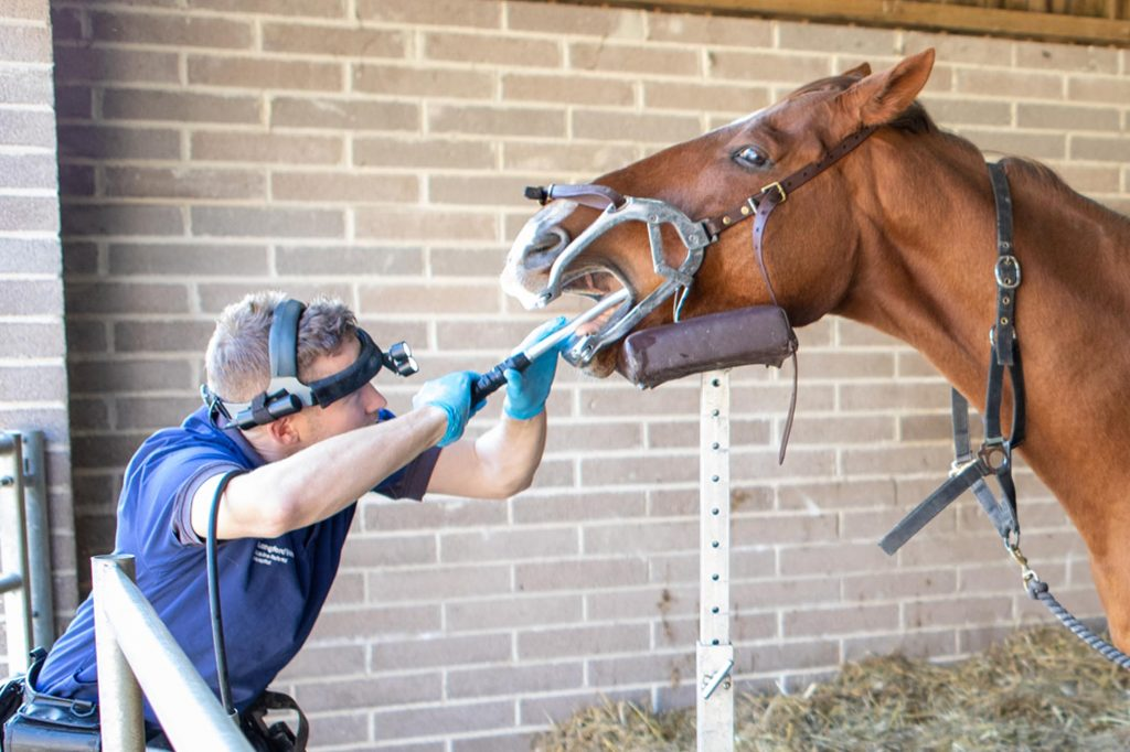 Vet treating horse's teeth with power tools