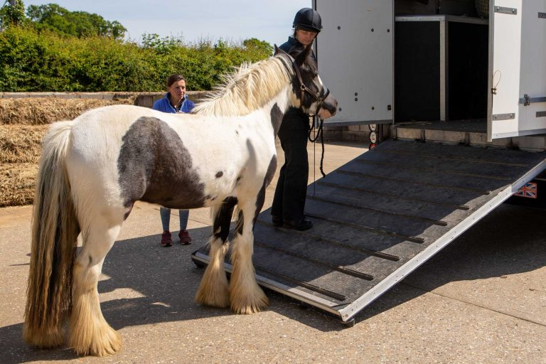 Welfare Wednesdays – Travelling your horse – managing risks for a better journey
