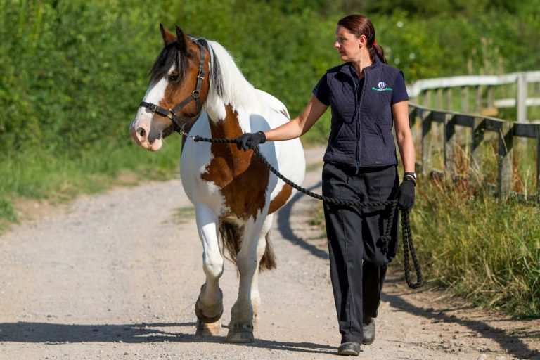 Top tips and practical advice on managing your horse's weight to keep them healthy