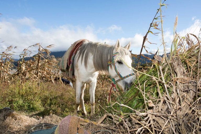 Equine charities host New York Climate Week event