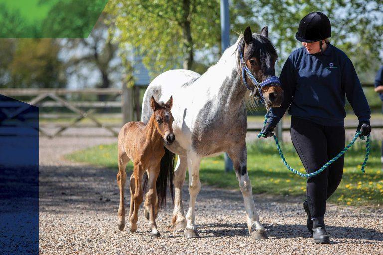 World Horse Welfare Virtual Conference 2020