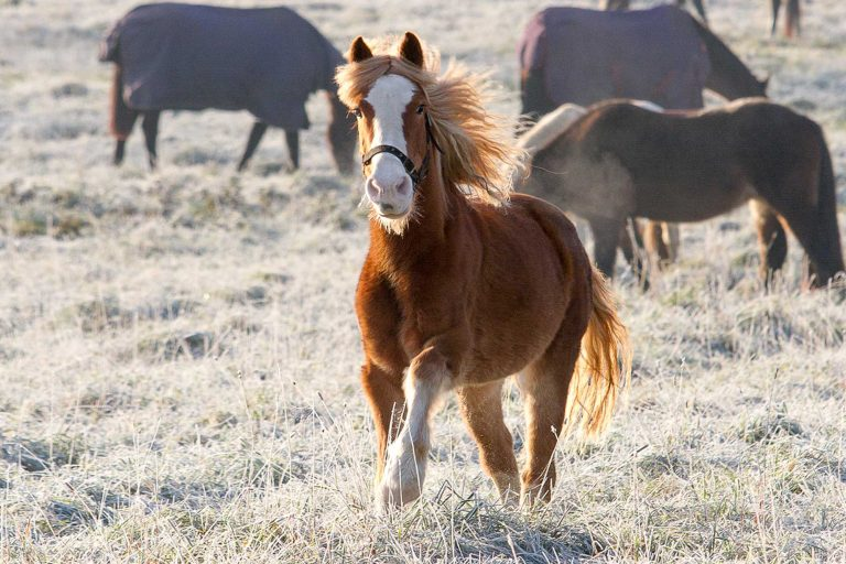 Last week to shop for Christmas gifts that help horses!