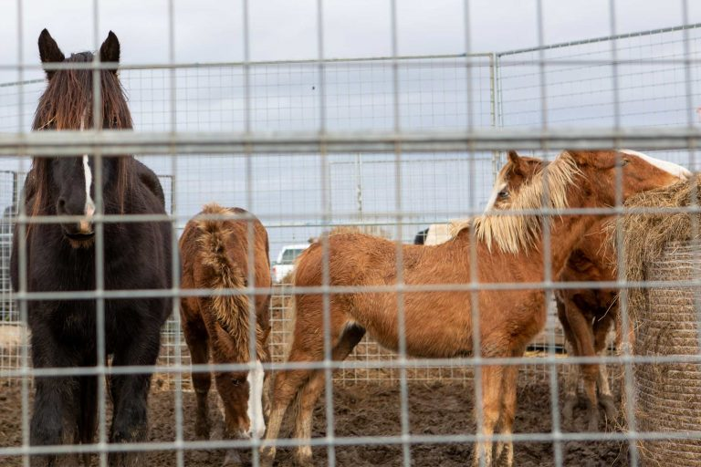 Welfare charities ask for public support to prevent horse welfare catastrophe and recommend solutions to fix 'broken system'