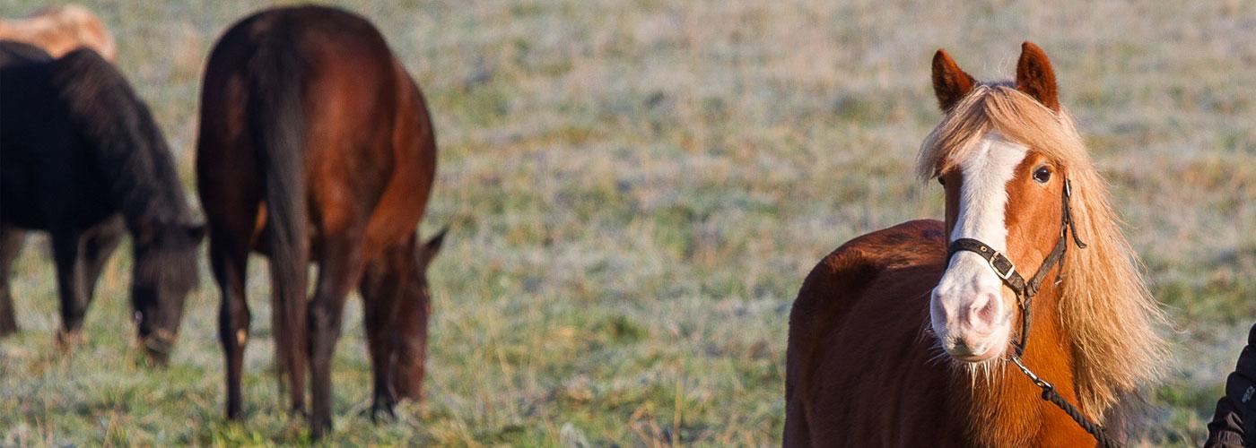 horses-in-progress-letterbox
