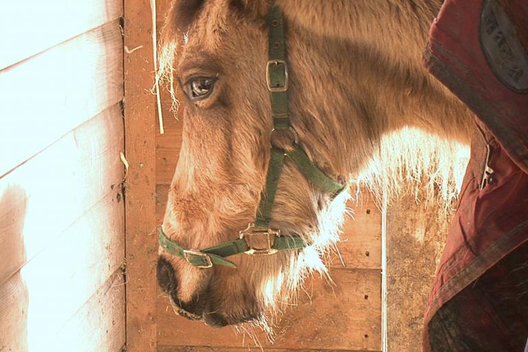 Welfare Wednesdays: Equine strangles – Exploring the realities of this common disease