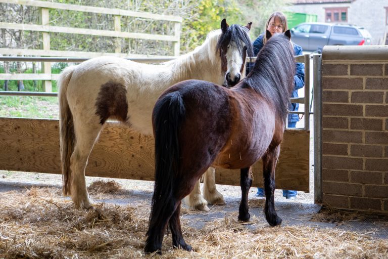Ponies rescued from shocking conditions