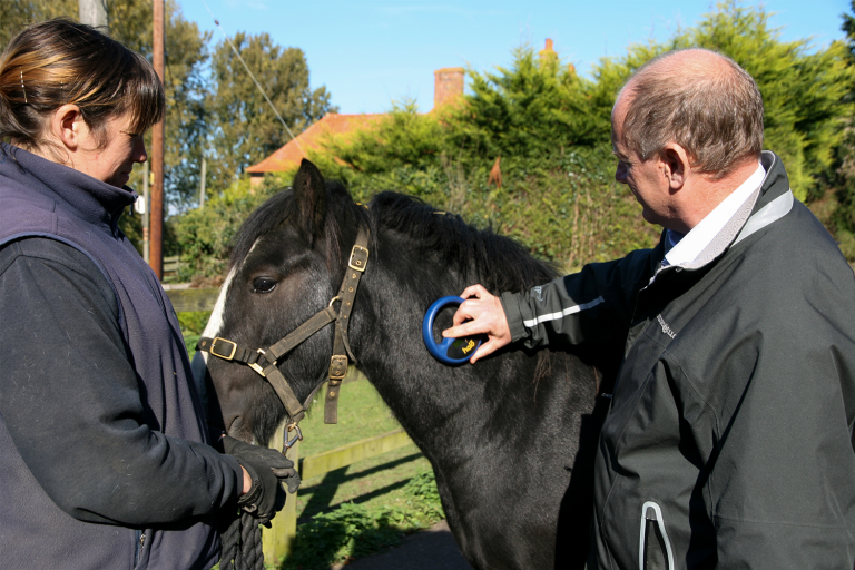 World Horse Welfare delivers evidence integral to improving welfare of post-Brexit international transport of horses