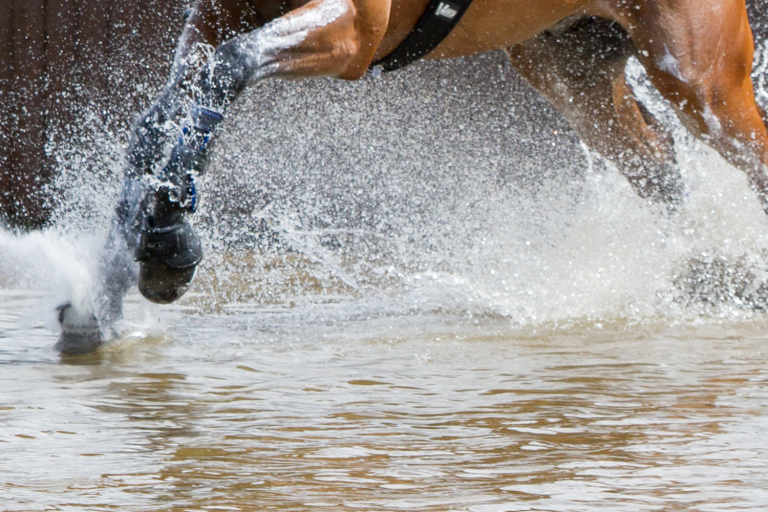 Welfare Wednesdays: How to keep horse sport ethical