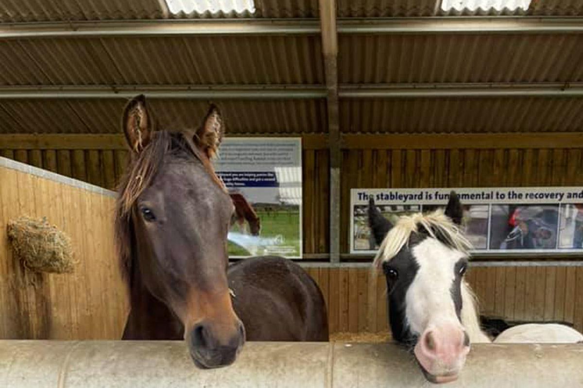 Skewbald pony being led in Stableyard at Hall Farm by groom