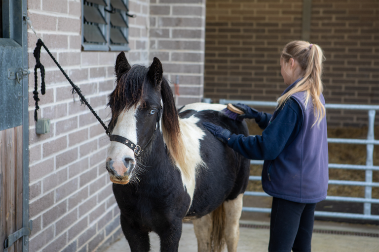 Welfare Wednesdays: How to restrain horses appropriately