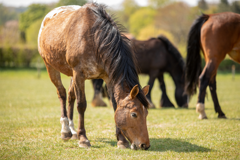 Statement on BBC Panorama programme – The Dark Side of Horse Racing