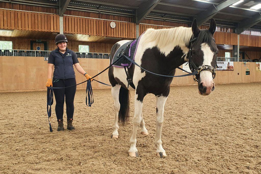 Piebald horse being long reined by World Horse Welfare groom