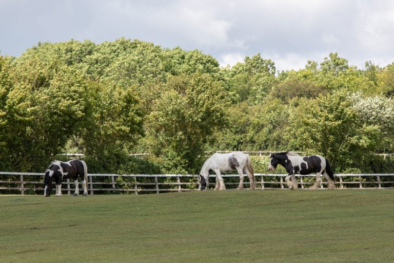 Glenda Spooner Farm tour