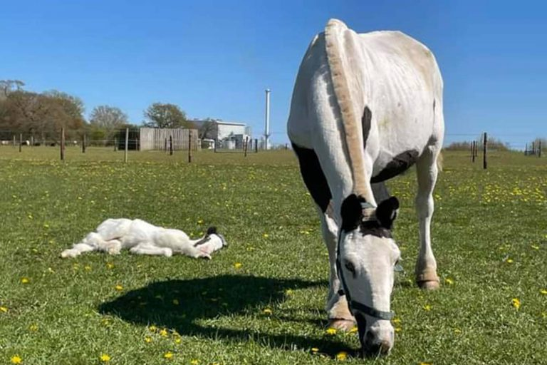 Dedicated team help 'bag-of-bones' rescued pony and her foal thrive