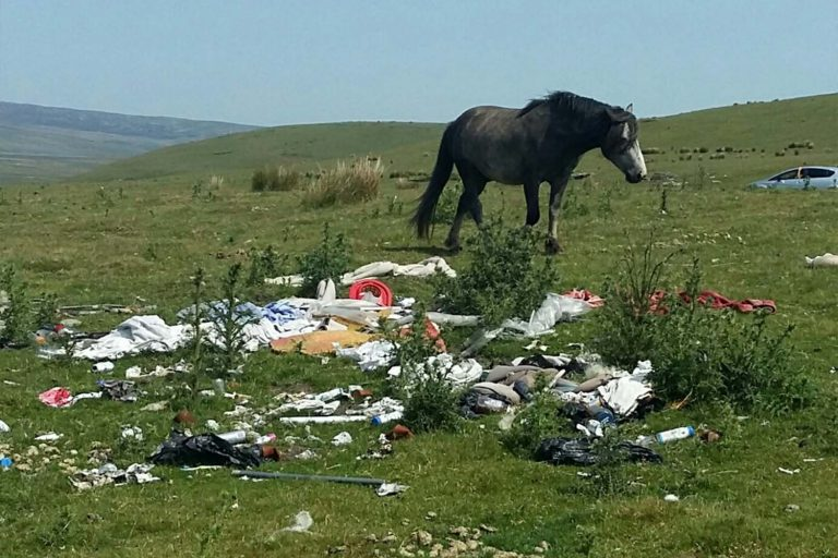 Window of opportunity for better welfare for equines in Scotland and Wales