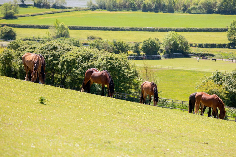 Horses grazing in the sunshine