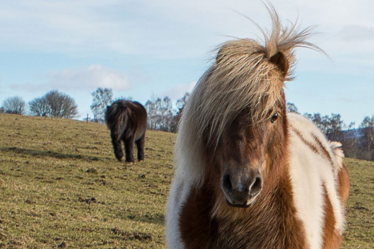 Support better equine welfare in Wales and Scotland