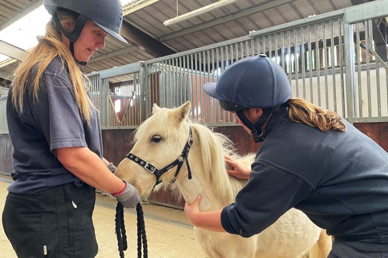 How to help a needle-shy horse overcome their fear