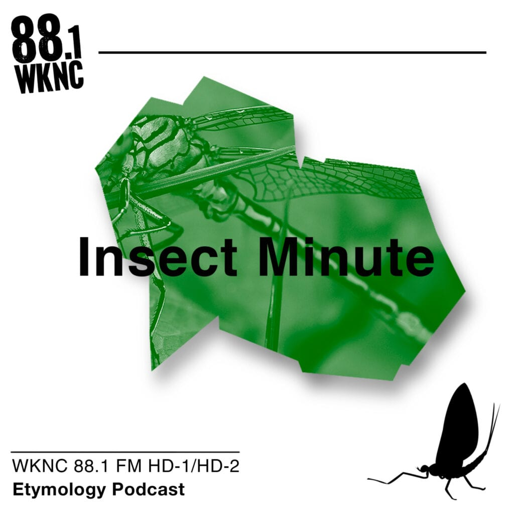 Insect Minute WKNC 88.1 FM HD-1/HD-2 etymology podcast