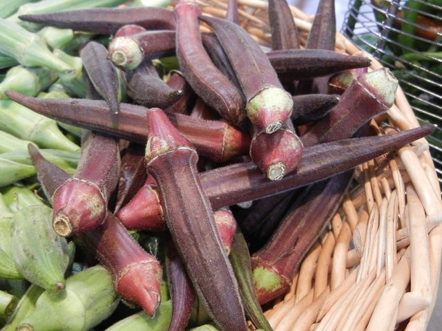 Have You Ever Seen Red Ochro or Okra?