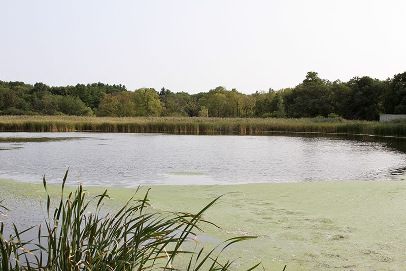 Dufield Pond Conservation Area