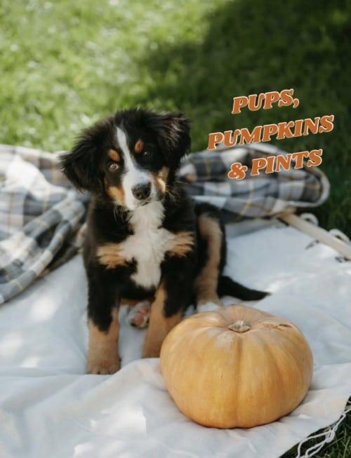 Pups, Pumpkins & Pints