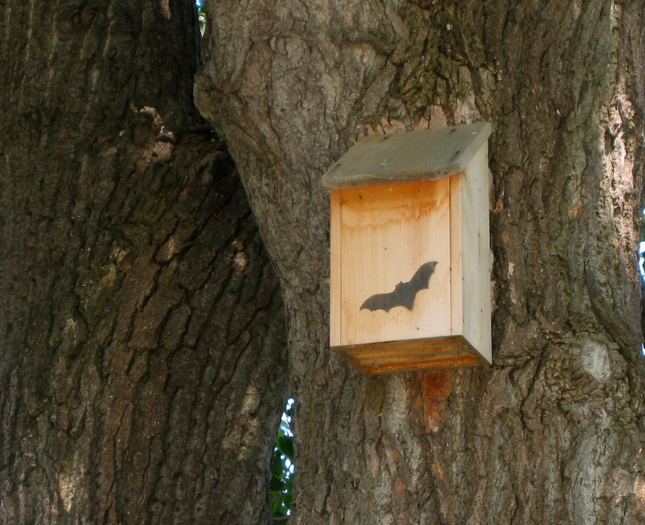 Bat houses at Mount St. Helens Visitor Center