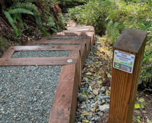 New steps at South Whidbey State Park