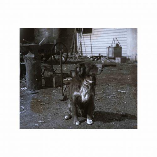 Antique Dog Photograph